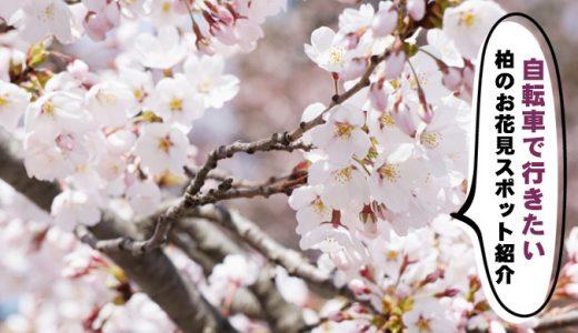 柏のお花見スポット紹介